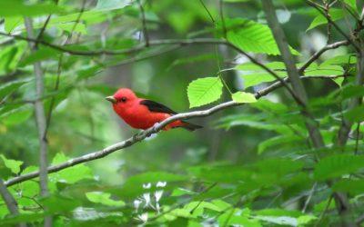 Bird Walk Opportunity