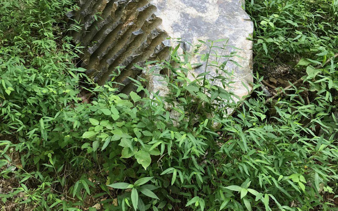 Quarry  Gardens Rocks!
